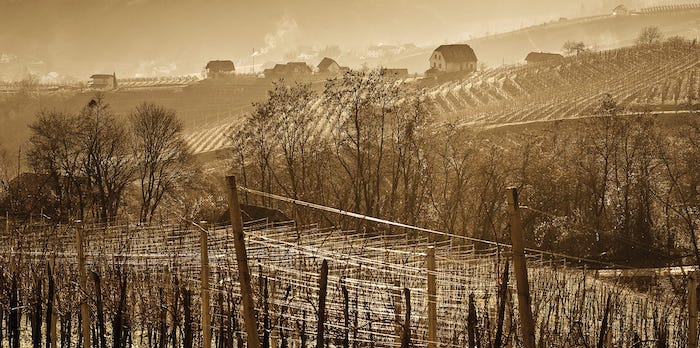 Wijngaard Bizeljsko